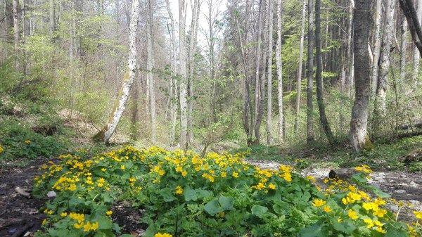 SLOVAKIA – Hike and bike 11